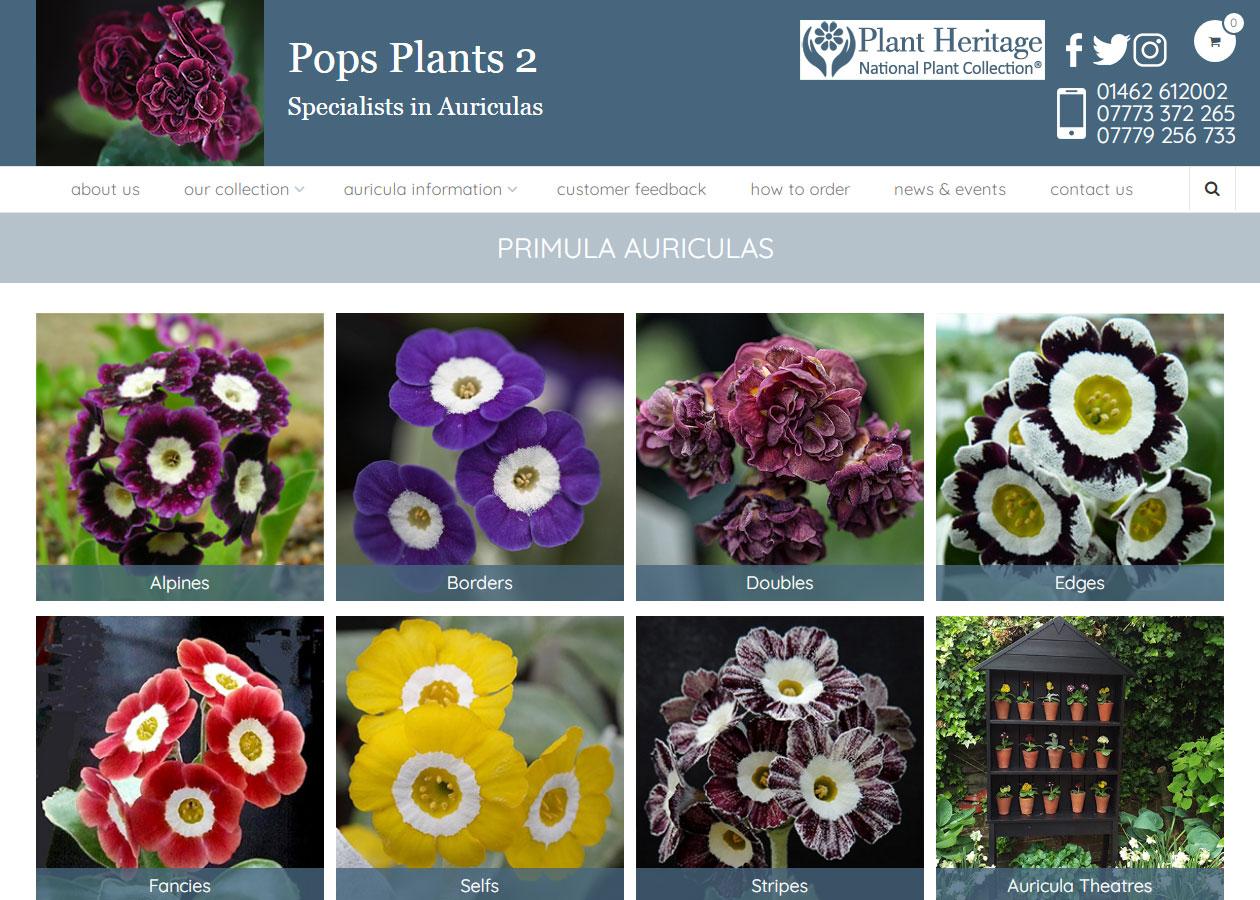 https://www.webrightnow.co.uk/wp-content/uploads/350-Pops-Plants.jpg